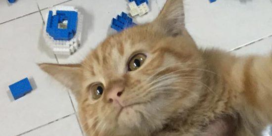 Este gato destruye sin remordimientos, en unos segundos, una escultura de más de 2.400 piezas que su dueño había montado durante dos semanas