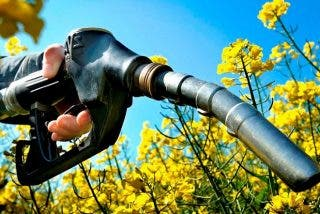 La Universidad de Córdoba crea el biocombustible que 'destronará' al petróleo