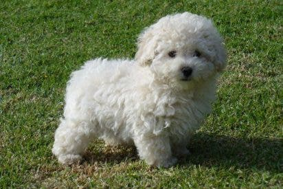 Un energúmeno mata a su perra a patadas por orinar la casa