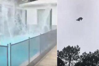 Uruguay: lanzan, desde un helicóptero, un cerdo a la piscina de un millonario