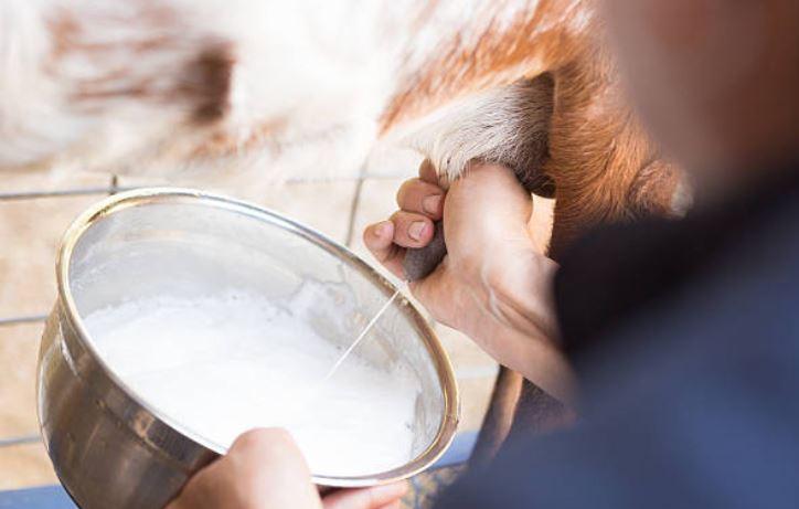 Cabras modificadas genéticamente generan en su leche un anticuerpo contra el cáncer