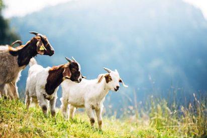 Propiedades de la leche de cabra