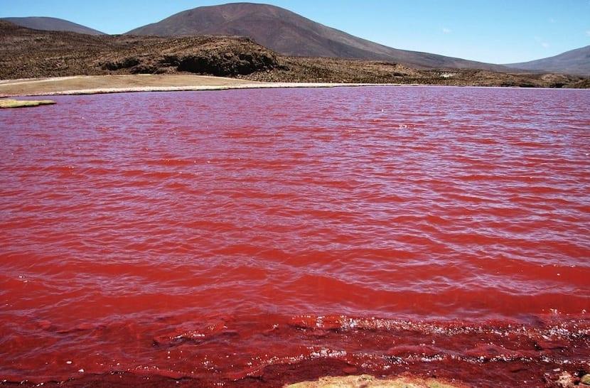 Mar Rojo: el 'asesino' silencioso del medioambiente