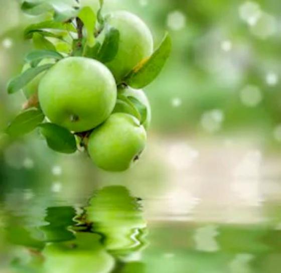 Perfumes con olor a manzana verde