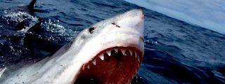 Fallece un surfista en Australia por el brutal ataque de un tiburón