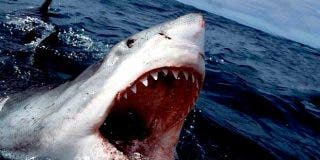 """Un tiburón casi arranca la pierna de un niño mientras hacía """"bodyboard"""" en la playa"""