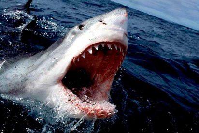 Un policía fuera de servicio se lanza al mar para rescatar a un niño acorralado por un peligroso tiburón