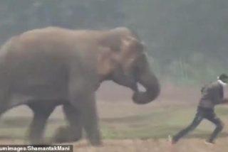El brutal ataque de un elefante a unos turistas que se acercaron para sacar un 'selfie'