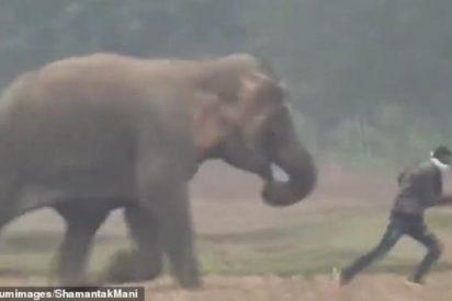 El despiadado ataque del elefante a unos turistas que se acercan a hacerse 'selfies'