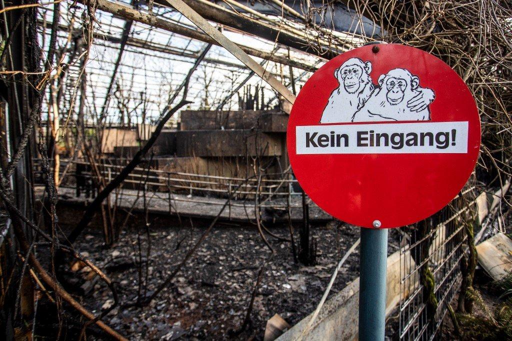 Esta peligrosa tradición de año nuevo incineró a 30 animales en un zoo de Alemania