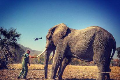"""El 'Mail on Sunday' vence en la corte al príncipe Harry por las polémicas fotos de un elefante """"drogado y atado"""""""