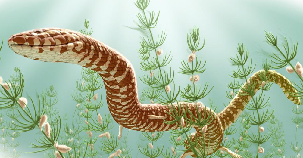 Esta es la sorprendente y desconocida evolución de las serpientes