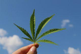 ¡Atención porretas!: Esta universidad de EEUU comenzará a ofrecer una master en cannabis este otoño