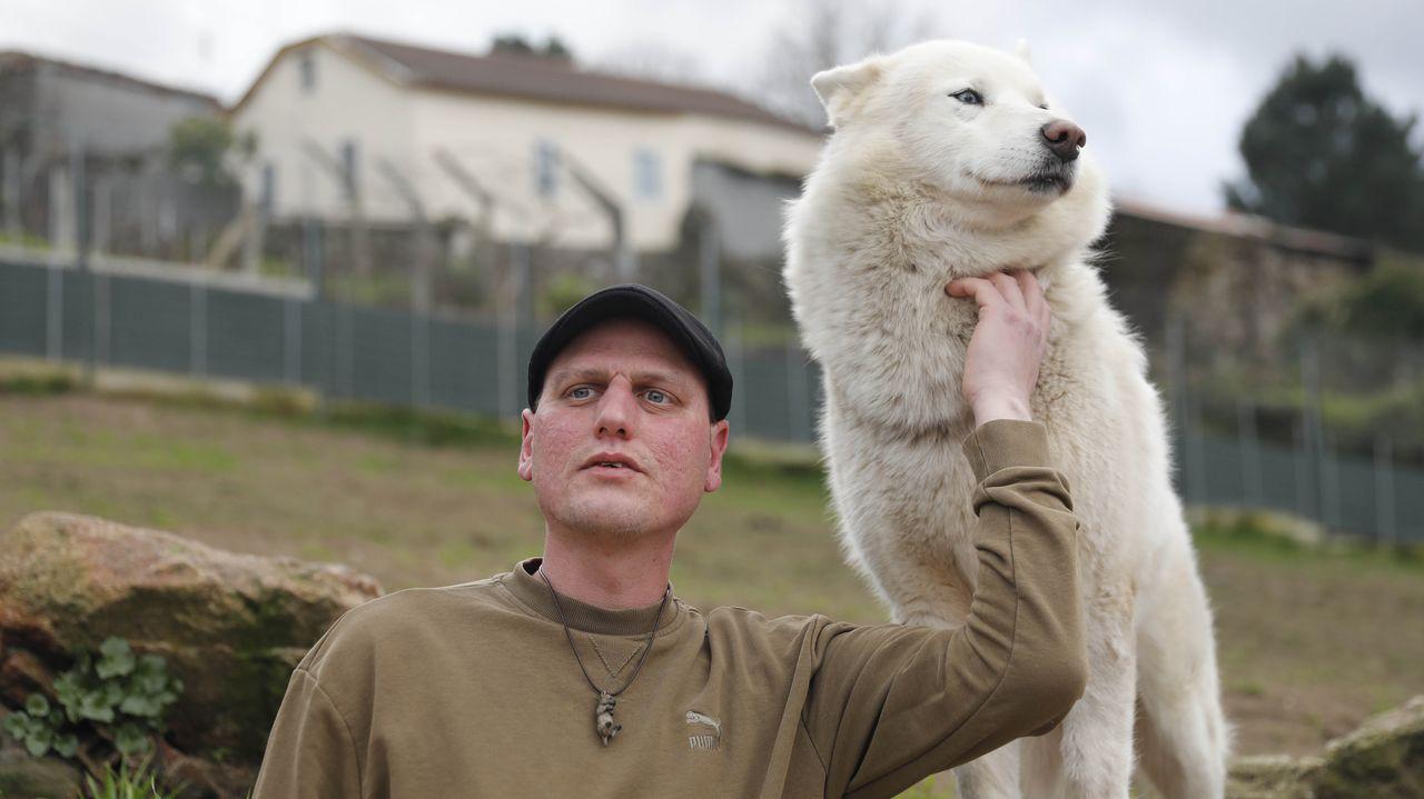 Mascotas: el alemán Michel vivía en Galicia con un lobo pensando que era un perro