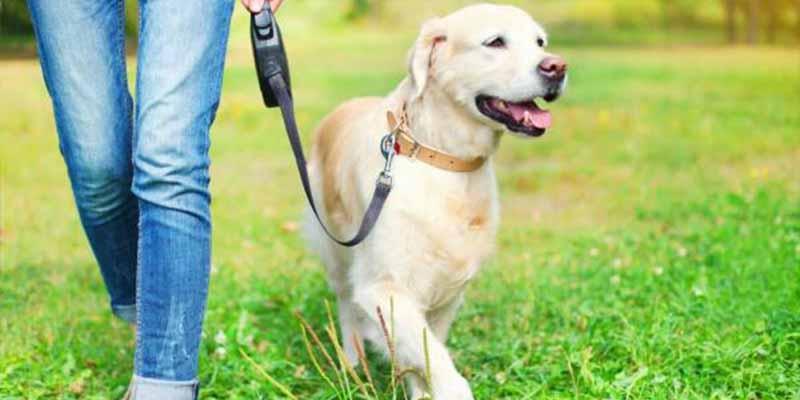 Pasear al perro: estás cometiendo este error garrafal con tu 'mejor amigo'