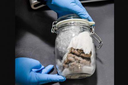 Canadá: envían un cerebro humano a través de un servicio depaquetería