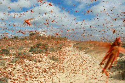 La plaga bíblica de langostas que oculta el cielo en África