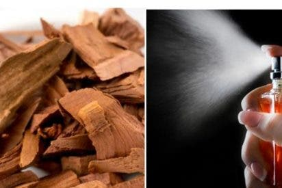 Mejores perfumes con olor a sándalo