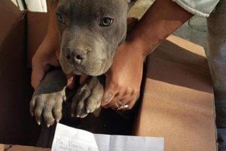 Un niño entrega en adopción a un hermoso cachorro para salvarle del maltrato de su padre
