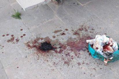 Valencia: dejan en plena calle unas vísceras en un charco de sangre