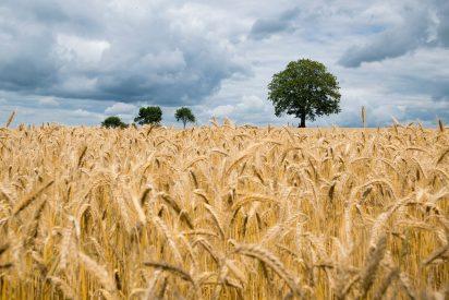 Cómo la manipulación del ARN podrá disparar las cosechas