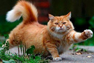 Chiste: el de la solterona caliente y el gato rencoroso