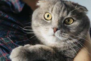 """Coronavirus: Un paciente con COVID-19 contagia a su gato y los científicos dicen que es """"un caso aislado"""""""