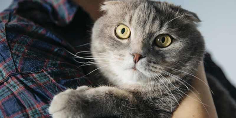 Coronavirus en Barcelona: descubren el primer caso de un gato con COVID-19