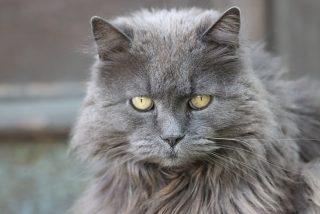 Miedo a la aspiradora o a la lluvia: las principales fobias de tu gato y como superarlas