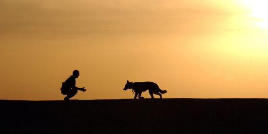 Los primeros pobladores de América ya tenían perros como acompañantes