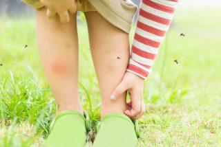 ¿Por qué los mosquitos pican a unos y no a otros y casi siempre en los tobillos?