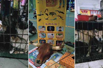 Coronavirus: vuelven a abrir los mercados con ventas de murciélagos en China y están abarrotados de gente