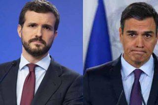 El hartazgo pasa factura al inepto Sánchez: un sondeo de La Razón coloca al PP empatado con el PSOE