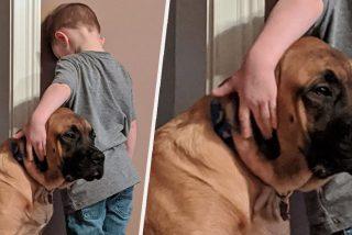 Mascotas: castigan al niño contra la pared y lo que hace su perro deja a todos atónitos