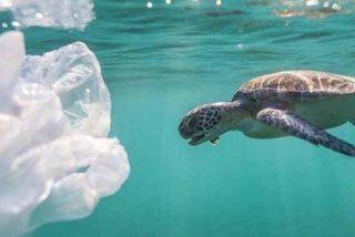 Las tortugas marinas se devoran el plástico porque lo ven como a una tortilla de patatas