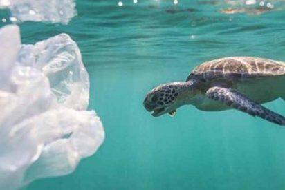 Las tortugas marinas devoran el plástico porque lo ven como a una tortilla de patatas