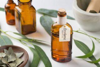 Beneficios tiene el aceite de eucalipto