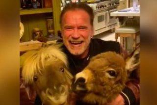 Así es la peculiar cuarentena por coronavirus de Arnold Schwarzenegger acompañado de su pony y su burro