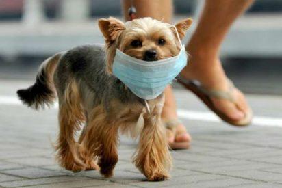 Coronavirus en mi mascota: ¿debo estar preocupado?