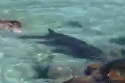 La desesperada reacción de este animal para escapar del brutal ataque de un lobo marino