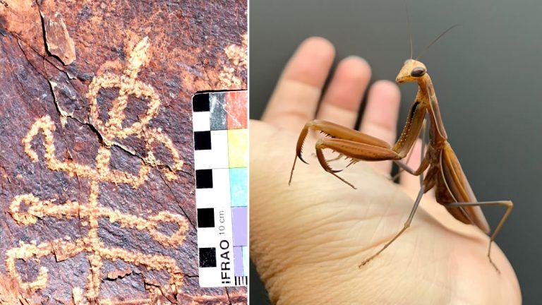 El misterioso petroglifo encontrado: mitad hombre, mitad mantis