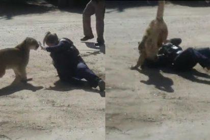 El despiadado ataque de un puma a una oficial de Policía