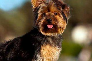 Estados Unidos: Compró un perro por tres mil dólares, lo envía en avión, y se lo entregan muerto