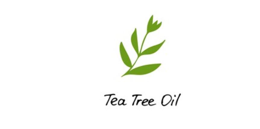 Para qué sirve el aceite del árbol del té