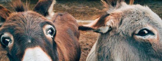 Chiste: el del burro delante para que no se espante