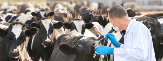 Los veterinarios también están indignados con el Gobierno Sánchez y sus 'expertos'