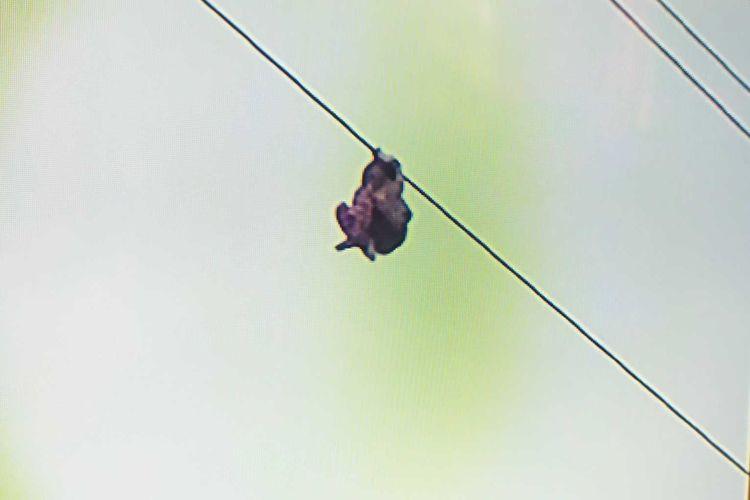 La niña que pide auxilio desesperada, mientras cuelga de un cable eléctrico a 15 metros de altura