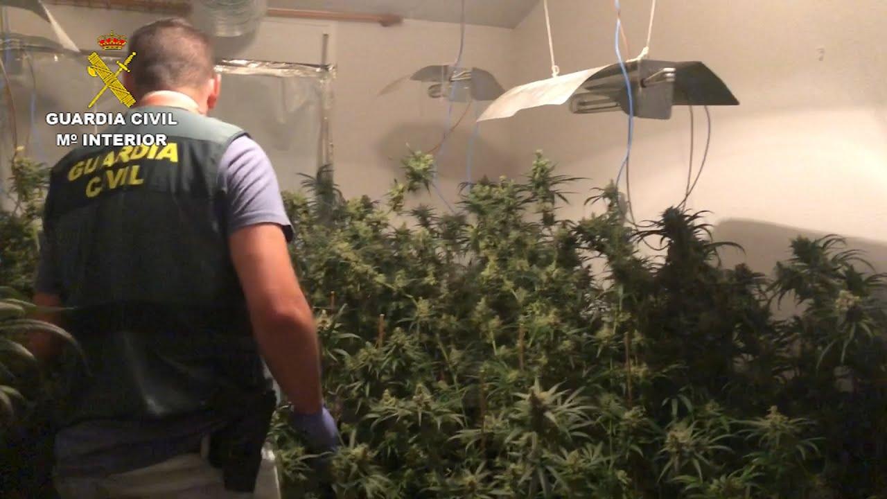 La Guardia Civil desmantela una gran plantación de marihuana y captura a 8 'fumetas'