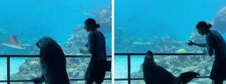 Un león marino disfruta de un divertido paseo por un acuario vacío por la cuarentena