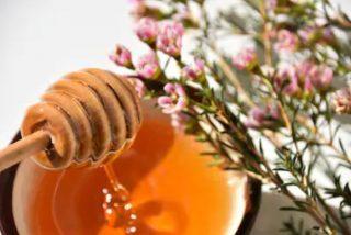 Miel de manuka propiedades y contraindicaciones  ✅